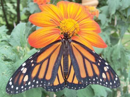 denise monarch